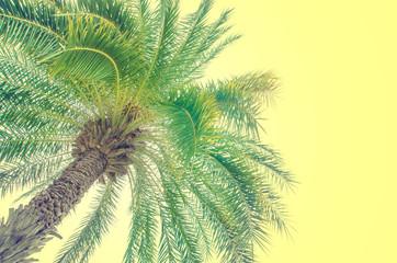 plam tree , vintage tone color