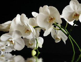 orchid flower reflection in water