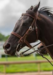 Dark Brown Horse Clean Profile