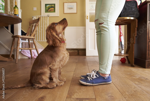 how to train a cocker spaniel puppy to sit