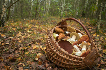 mushrooms in the basket
