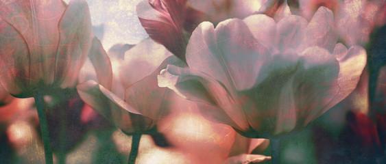 Fotoväggar - tinted tulips texture concept