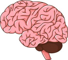 human brain cartoon
