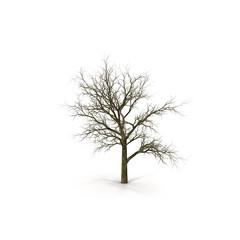 Winter Oak Tree Isolated on White Background 3D Illustration