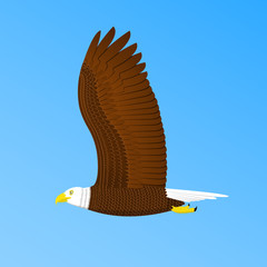 Bald eagle flying in the sky. Eagle isolated on blue background. Vector illustration