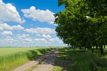 road through the green meadow