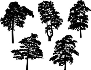 five pine black trees set isolated on white