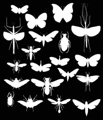 collection with white twenty insects
