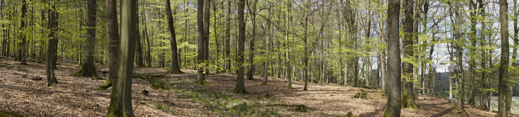 Buchenwald, Naturpark Arnsberger Wald, Sauerland, Nordrhein-Westfalen, Deutschland