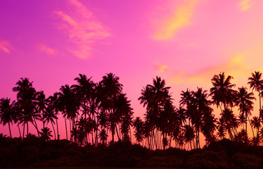Palm trees silhouettes on tropical beach at twilight