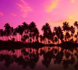 Tropical palm trees silhouettes with reflection in calm water at sunset