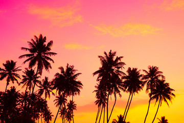 Tropical coconut palm trees silhouettes at warm vibrant sunset on island beach