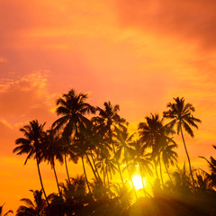 Warm orange sunrise on tropical beach with sun rays throught palm trees silhouettes