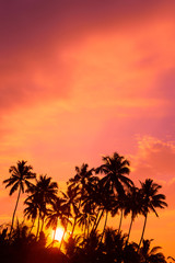 Warm orange sunrise on tropical beach with palm trees silhouettes