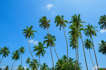 Palm trees over blue sky background on tropical beach