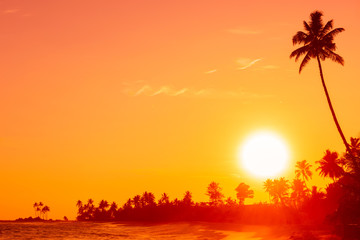 Sunset on tropical beach with palm tree silhouette and shining sun circle