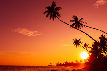 Sunset on tropical beach with palm trees silhouettes and shining sun circle