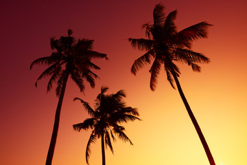 Tropical palm silhouettes on ocean beach at vivid sunset time