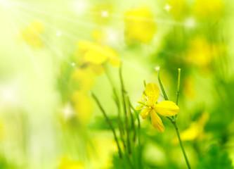 Summer Background. Flowers