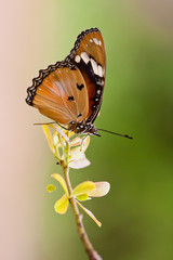 Butterfly perched on a branch