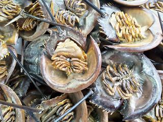 Swordtail raw fresh in market, seafood