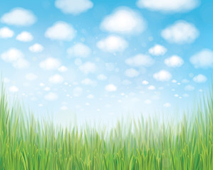 Vector green grass border on  blue sky  background.