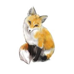 Very nice cute fox. Fox sitting.