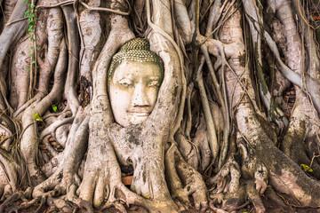 Buddha Head of Ayutthaya