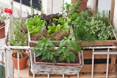 hochbeete am balkon mit kr utern und salat 112395223. Black Bedroom Furniture Sets. Home Design Ideas