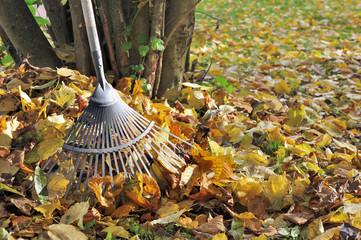 râteau dans tas de feuilles morte près d'un arbre