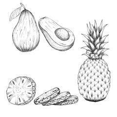 Hand drawn sketch style illustration of pineapple and avocado. tropical fruit illustrations isolated on white background