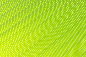 close up of the leave texture,the green leave texture with the light