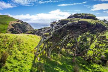 Wind dodger, New Zealand