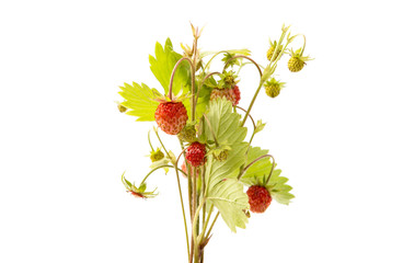 wild strawberry isolated