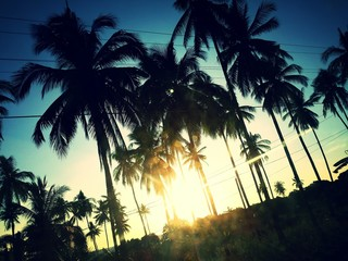Palms along the road