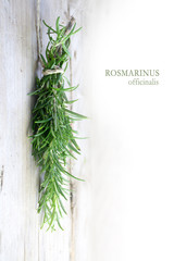 bunch of rosemary herbs, Rosmarinus officinalis, hanging to dry at a wooden wall, sample text