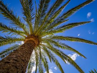 Tall tropical palmtree