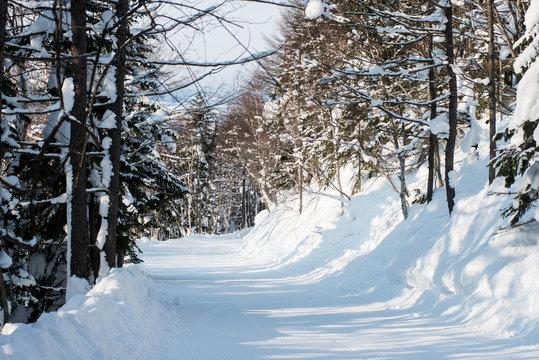 winter forest ski trail