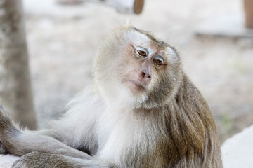 Portrait monkey
