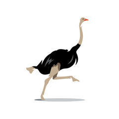 Vector Ostrich Cartoon Illustration.
