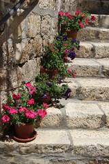 Blumen auf einer Stein Treppe in Hvar, Kroatien