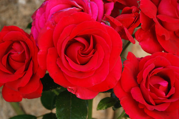 We can see a bouquet of various red roses with a beautiful color and shape, with its green leaves in the background.