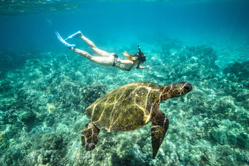 Sexy girl swims near a giant turtle. View under water