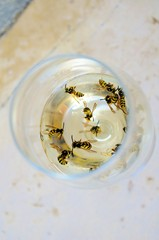 wasps in the glass of white wine