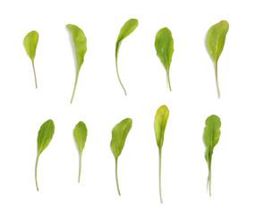 Arugula leaves set on white