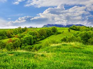 fruit garden on hillside meadow in mountain