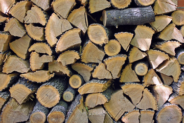 Harvested for winter firewood