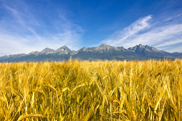 Field cobs under High Tatras