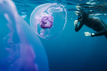 Freediver swim in the sea with jellyfish