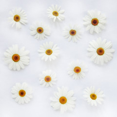 chamomile background/ flat random lay of flowers daisies top view